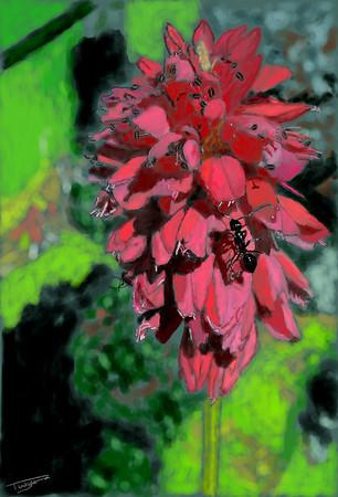 Ant on Crimson Knotweed